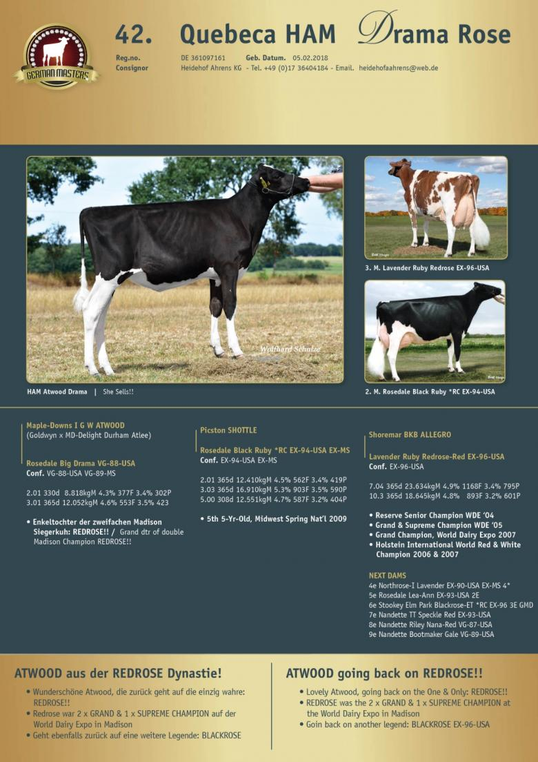 Datasheet for Lot 42. Quebeca HAM Drama Rose