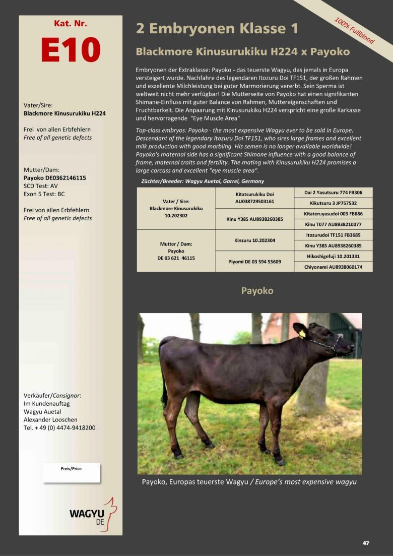 Datasheet for Lot E10. 2 embryos (Grade A) Blackmore Kinusurukiku 10.202302 x Payoko DE 03 621 46115